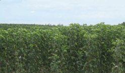 Нижнегорский плодопитомник в Крыму - выращивание и продажа саженцев плодовых деревьев