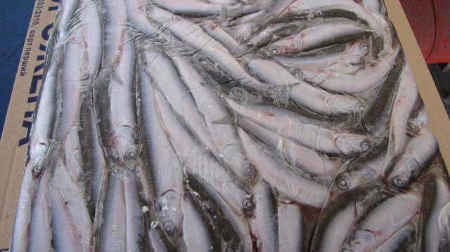 Купить рыбу оптом